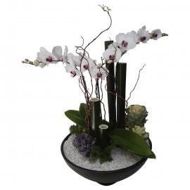 Orquídea Coqueta
