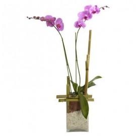 Orquídea Couture
