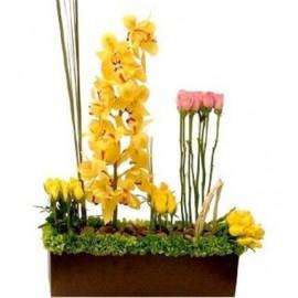 Jardín de Orquídea