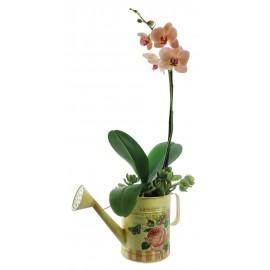Orquídea Soraya