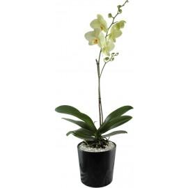 Orquídea Cache