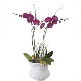 Orquídea reina