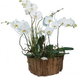 Nido de orquídeas