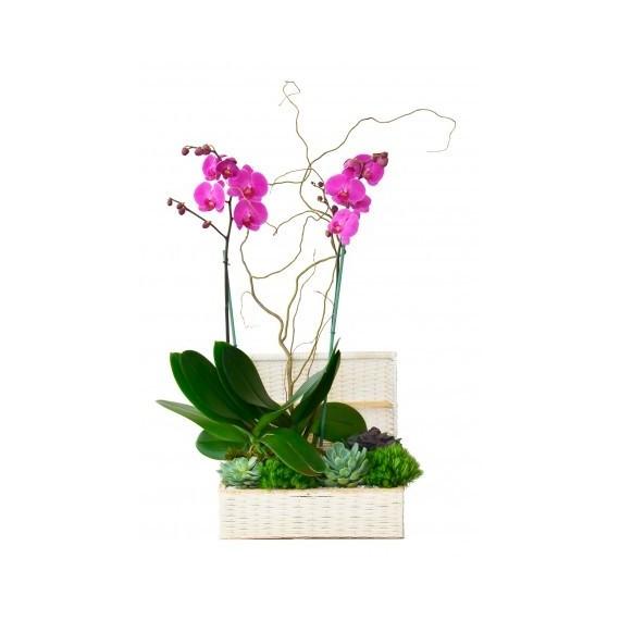 Orquídea denali