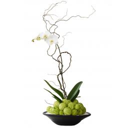 Orquídea fashionista