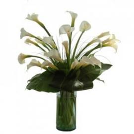 Alcatraces De Flor En Flor