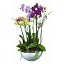 Mundo de Orquídeas de Colores