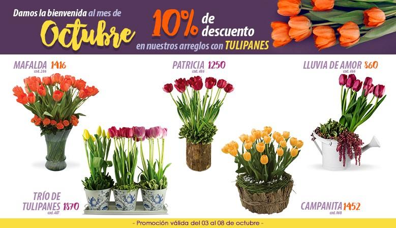 Descuento en tulipanes